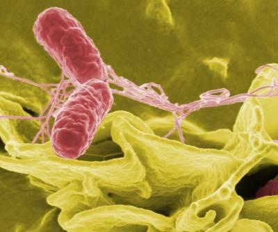 plan van aanpak salmonella Informatiebijeenkomsten Salmonella plan van aanpak plan van aanpak salmonella